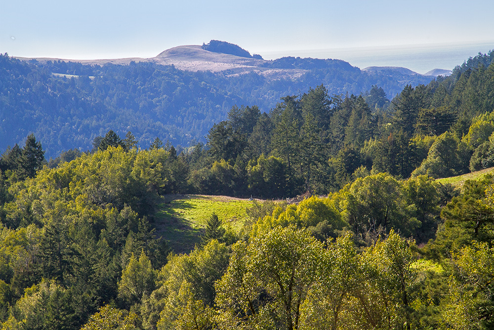 Willow Creek Road Occidental Sonoma County Calif The